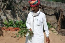 Prajapat and his brother have planted herbs in half acre of their agricultural land. Source: Ravleen Kaur