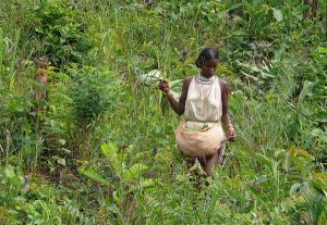 A Dongria Kondh girl collecting forest food in Niyamgiri Hills. Source: Rita Wilaert/Flickr