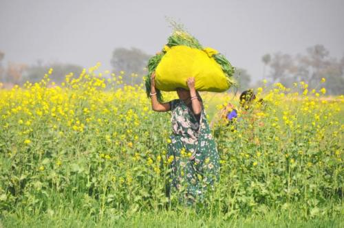 Women are mostly invisible farmers.  Image: CCAFS/Flickr