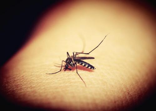 Malaria, at one time a rural disease has diversified into various ecotypes. Source: Pixabay