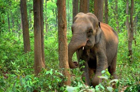 क्या सच में किसानों का लालच हाथियों के घटते रहवास के लिए जिम्मेदार है? Source: Need Pix.com