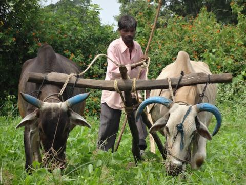 Can direct income support help farmers?