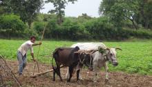 ग्रामीण भारत के 56 प्रतिशत परिवारों के पास कोई खेती की ज़मीन नहीं है। चित्र: मनु मुदगिल
