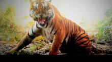 A still from one of the trap cameras in Pakke Tiger Reserve. Source: Arunachal Pradesh Forest Department